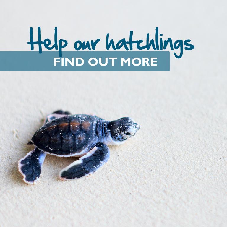Hatchlings - Mobile-01