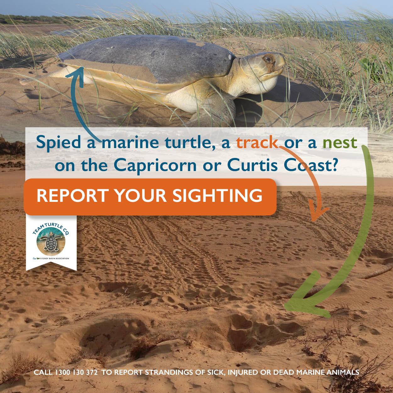 TTCQ - Report a sighting Mobile