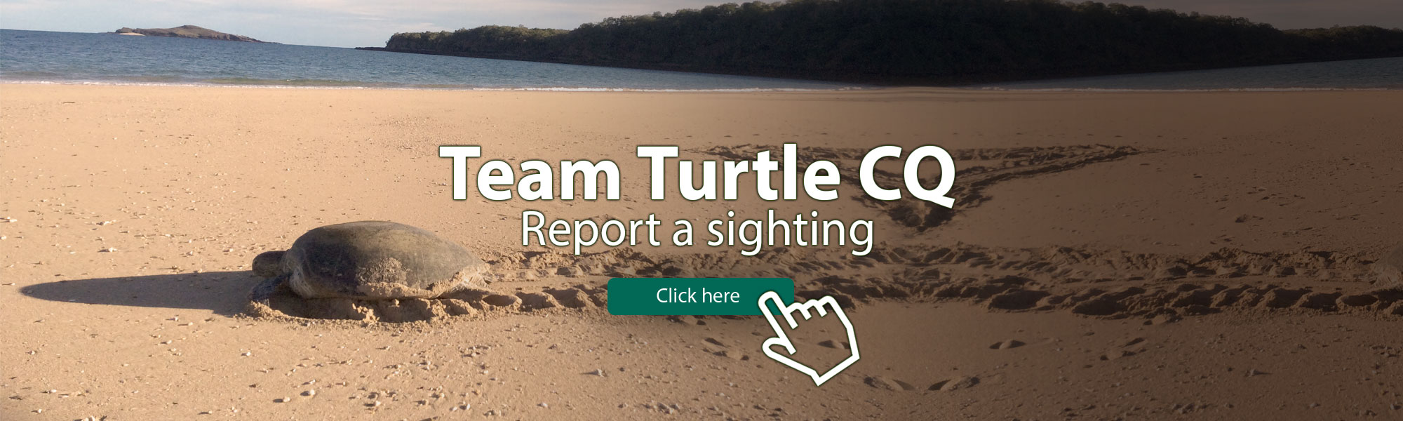 Turtle-Banner-Wide