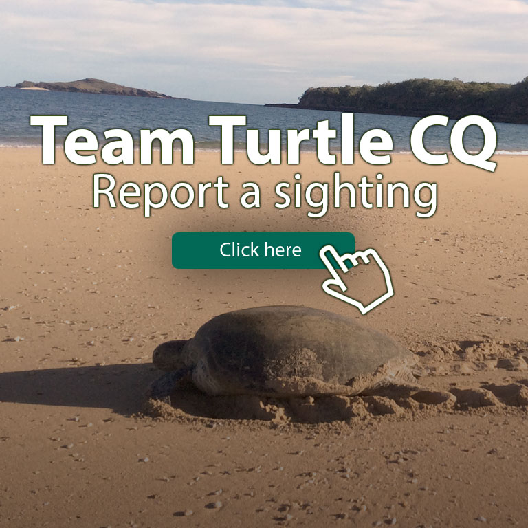 Turtle-Banner-mobile